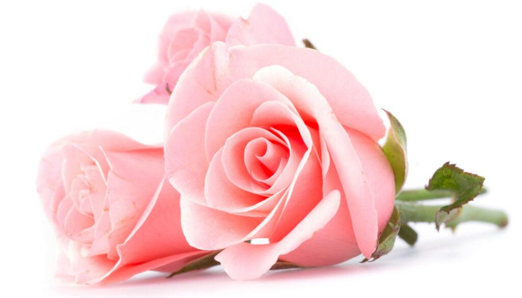 rozaa